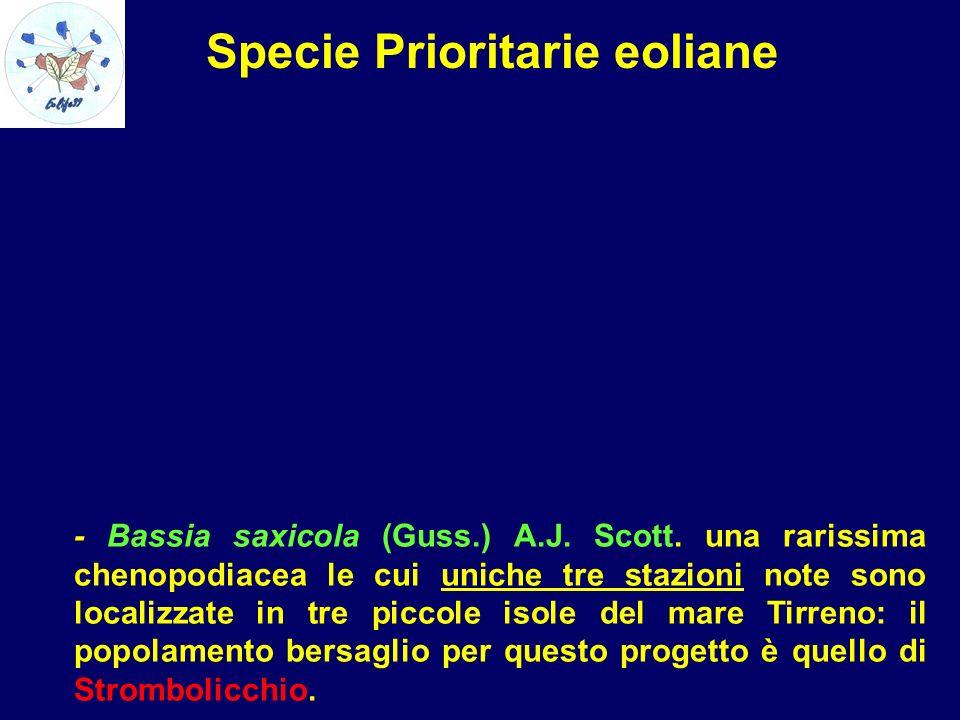 Specie Prioritarie eoliane - Bassia saxicola (Guss.) A.J. Scott. una rarissima chenopodiacea le cui uniche tre stazioni note sono localizzate in tre p
