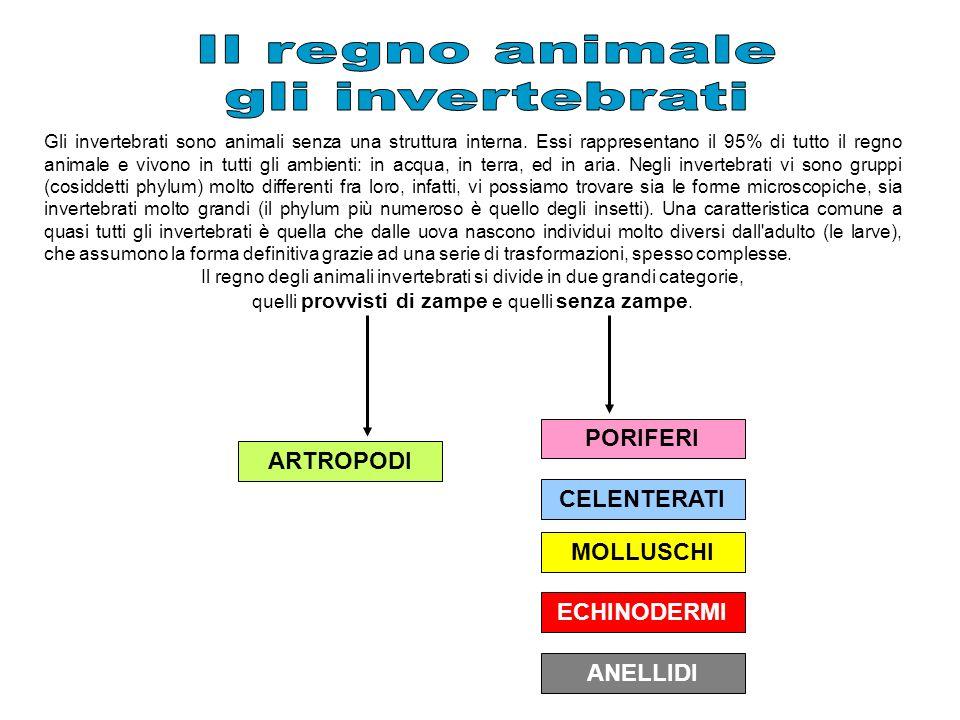 Gli invertebrati sono animali senza una struttura interna. Essi rappresentano il 95% di tutto il regno animale e vivono in tutti gli ambienti: in acqu
