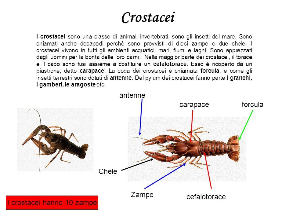 Crostacei I crostacei sono una classe di animali invertebrati, sono gli insetti del mare. Sono chiamati anche decapodi perchè sono provvisti di dieci