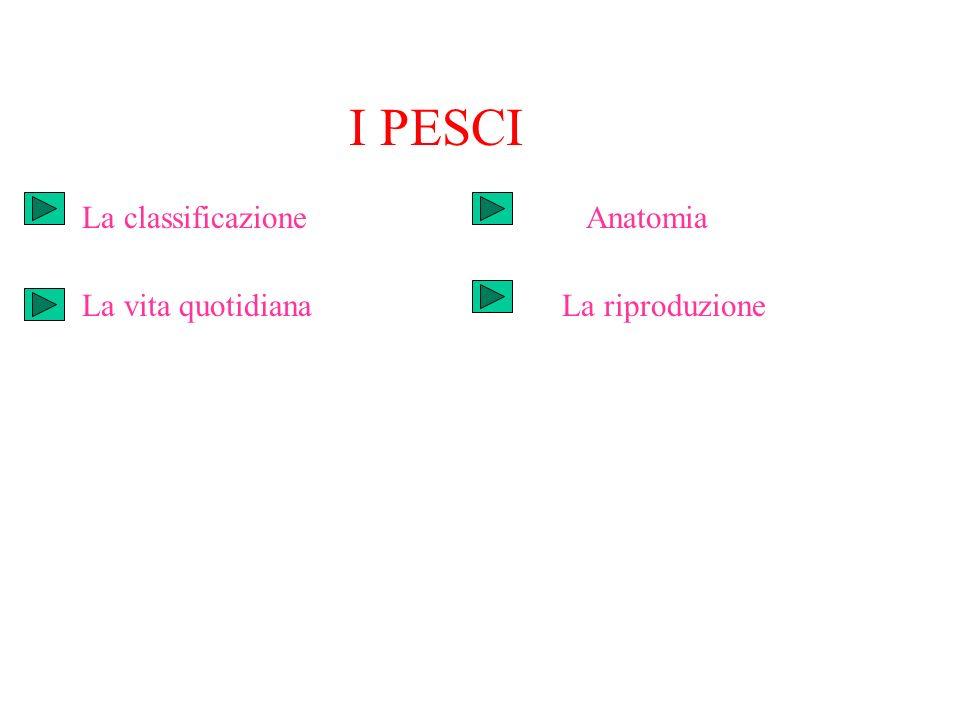 I PESCI La classificazione La vita quotidiana Anatomia La riproduzione