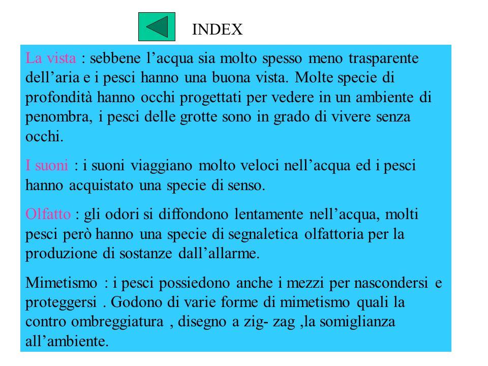 INDEX La vista : sebbene lacqua sia molto spesso meno trasparente dellaria e i pesci hanno una buona vista. Molte specie di profondità hanno occhi pro
