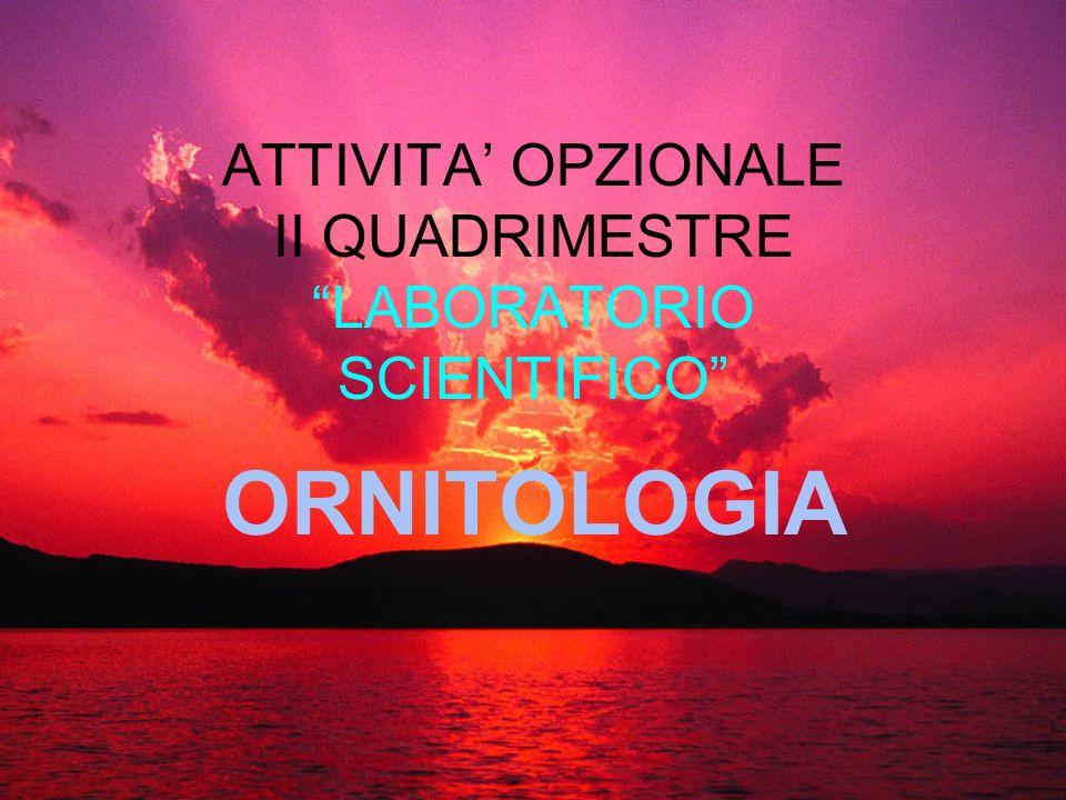 ATTIVITA OPZIONALE II QUADRIMESTRE LABORATORIO SCIENTIFICO ORNITOLOGIA