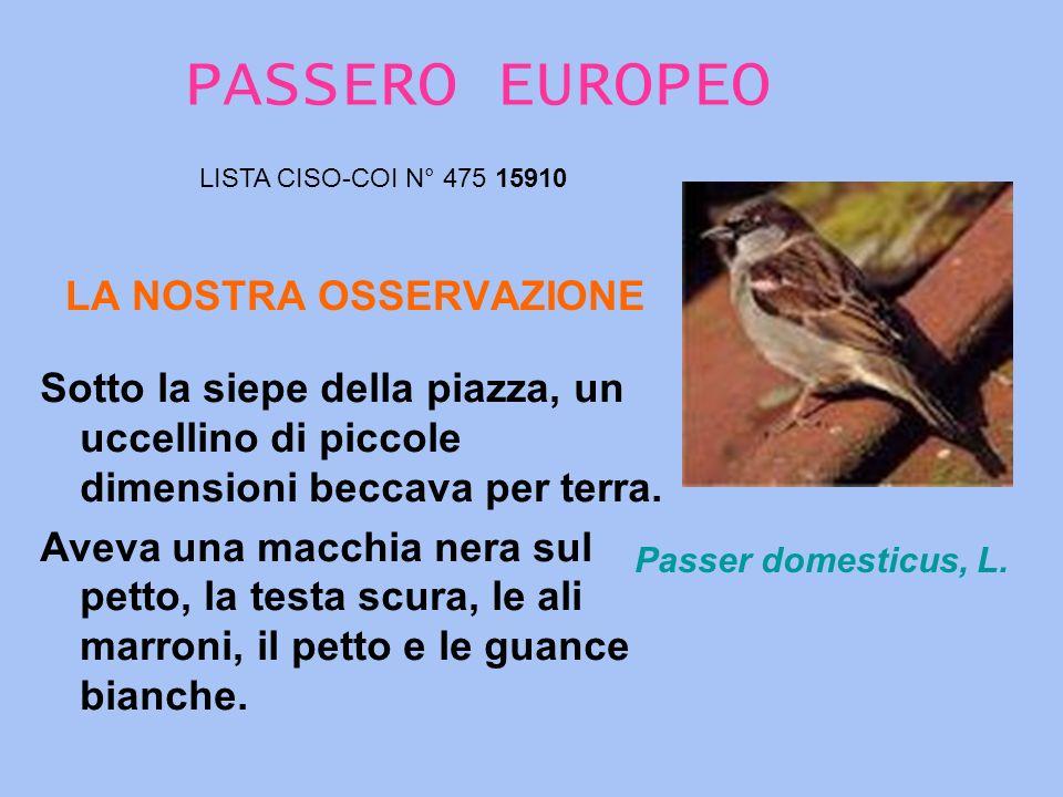 TORTORA COMUNE LA NOSTRA OSSERVAZIONE LISTA CISO-COI N° 277 06870 STREPTOPELIA TURTUR, L.