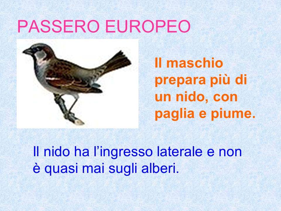 PASSERO EUROPEO Il nido ha lingresso laterale e non è quasi mai sugli alberi.