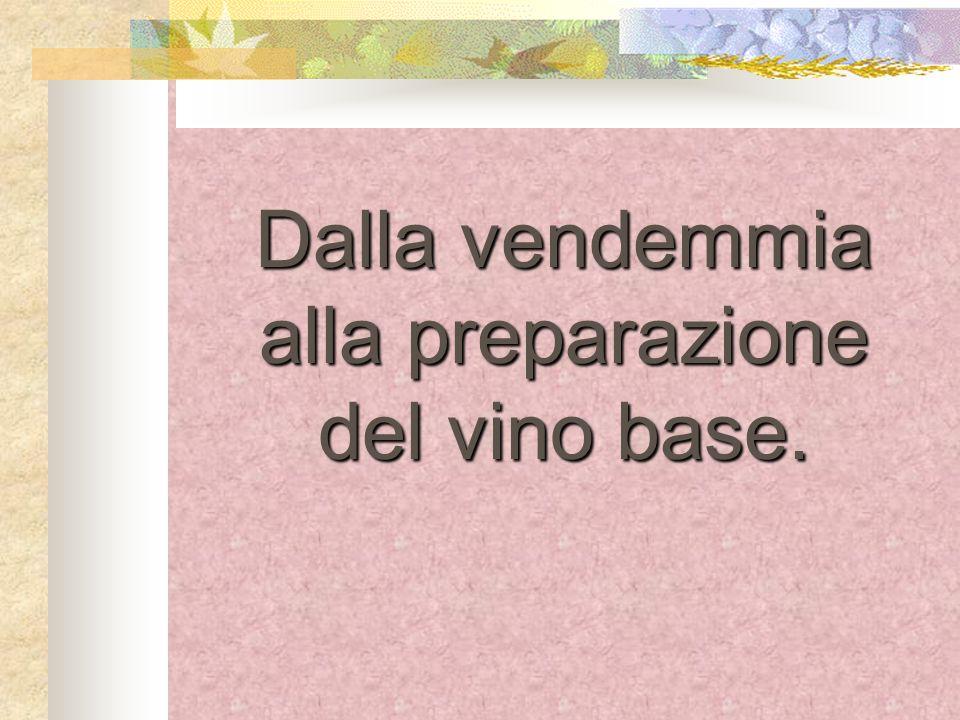 La vendemmia Per fare un buon vino è importante innanzitutto che luva sia sana e matura.
