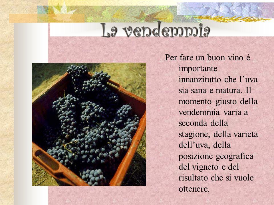 La vendemmia Per fare un buon vino è importante innanzitutto che luva sia sana e matura. Il momento giusto della vendemmia varia a seconda della stagi