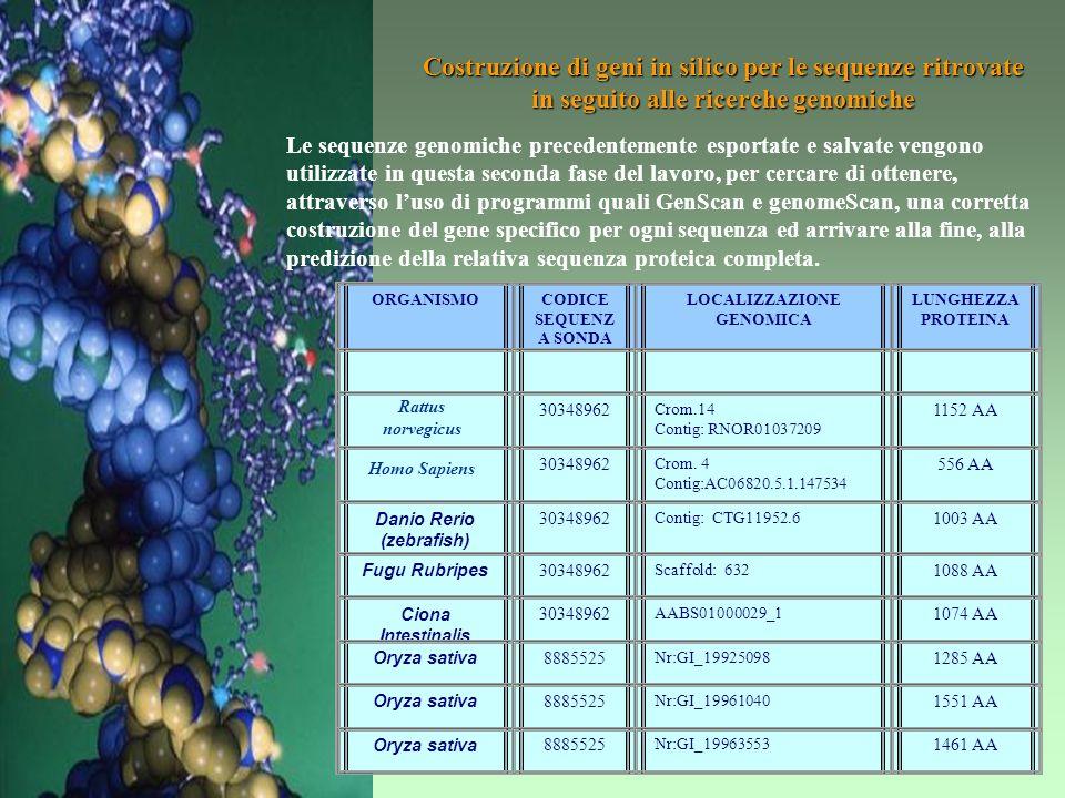 Realizzazione di un allineamento multiplo completo – Parte dellallineamento multiplo di 35 sequenze proteiche appartenenti alla famiglia della NRPSs,.