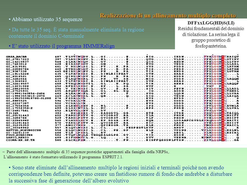 Realizzazione dellalbero filogenetico Albero filogenetico.
