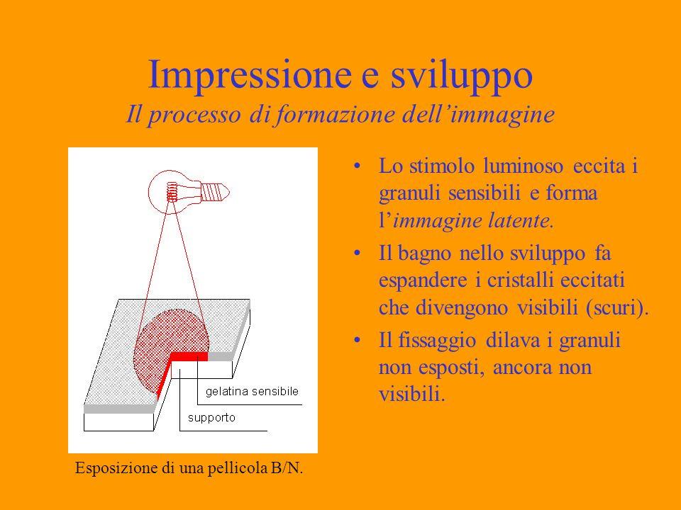 Impressione e sviluppo Il processo di formazione dellimmagine Lo stimolo luminoso eccita i granuli sensibili e forma limmagine latente. Il bagno nello