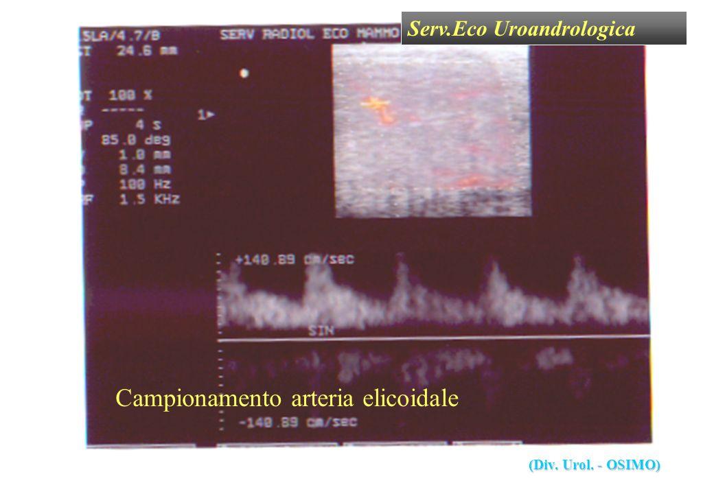 Serv.Eco Uroandrologica (Div. Urol. - OSIMO) Campionamento arteria elicoidale