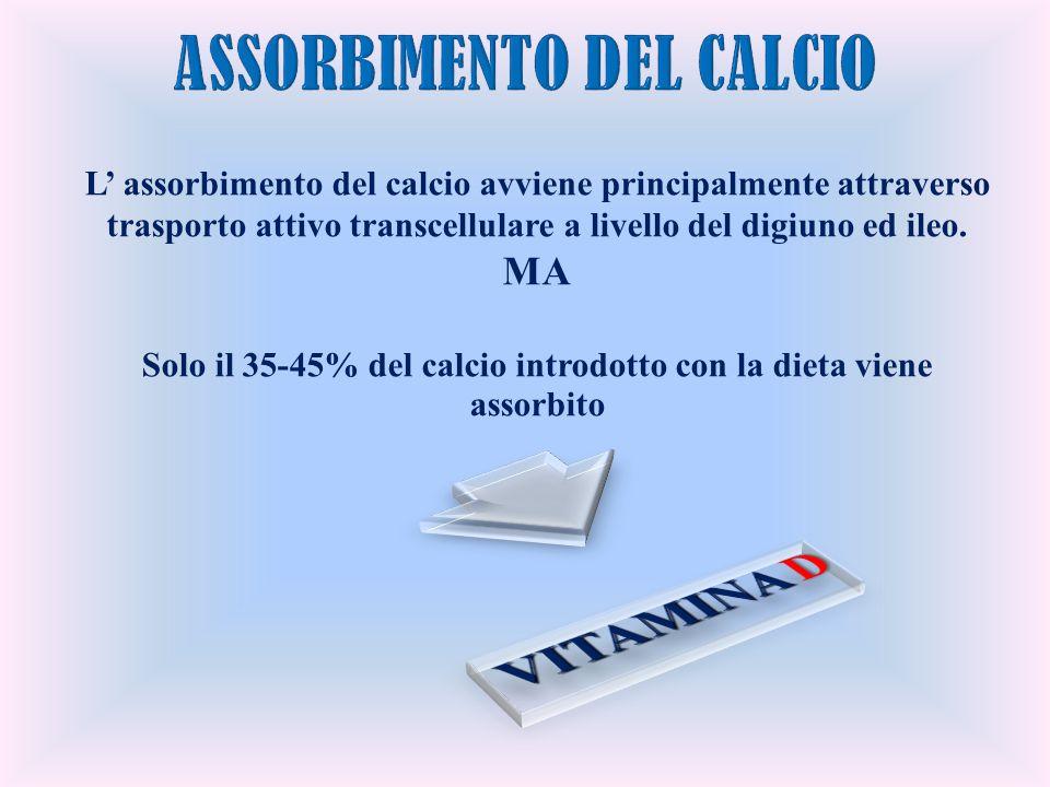 L assorbimento del calcio avviene principalmente attraverso trasporto attivo transcellulare a livello del digiuno ed ileo. MA Solo il 35-45% del calci