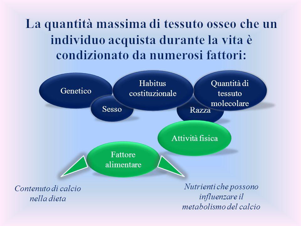 Genetico Razza Quantità di tessuto molecolare Sesso Habitus costituzionale Fattore alimentare Attività fisica Contenuto di calcio nella dieta Nutrient