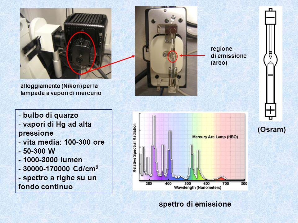 spettro di emissione (Osram) - bulbo di quarzo - vapori di Hg ad alta pressione - vita media: 100-300 ore - 50-300 W - 1000-3000 lumen - 30000-170000