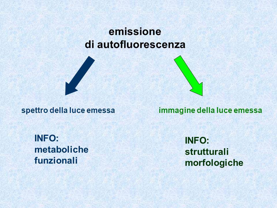 emissione di autofluorescenza INFO: metaboliche funzionali INFO: strutturali morfologiche spettro della luce emessa immagine della luce emessa