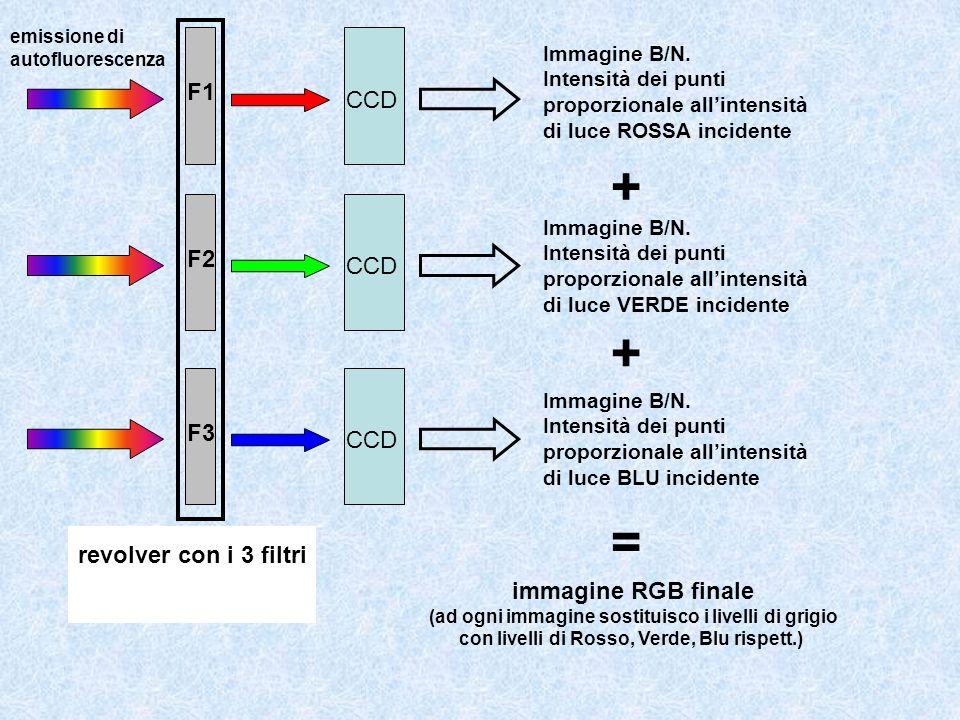 Immagine B/N. Intensità dei punti proporzionale allintensità di luce ROSSA incidente F1 Immagine B/N. Intensità dei punti proporzionale allintensità d