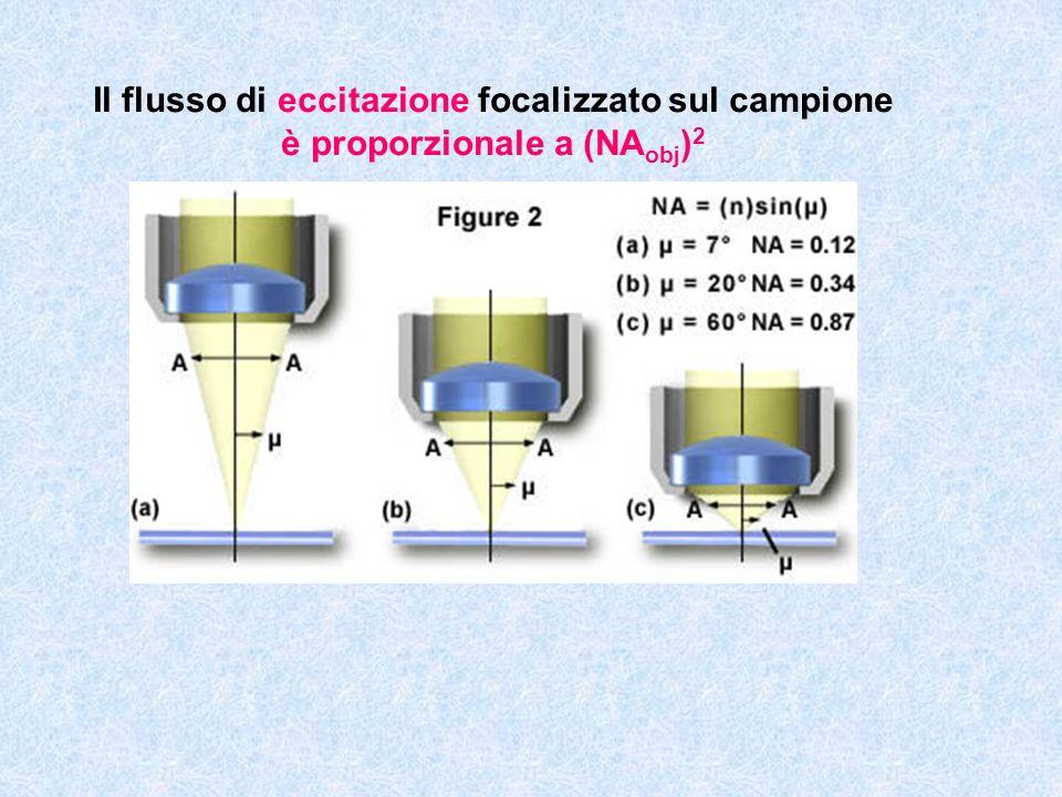 Il flusso di eccitazione focalizzato sul campione è proporzionale a (NA obj ) 2