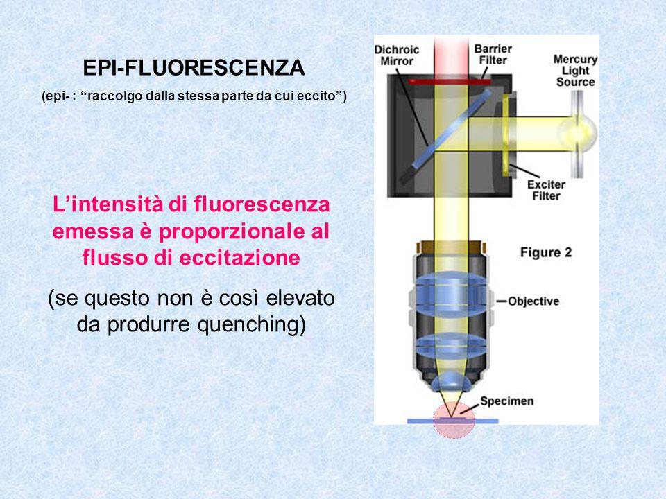 Lintensità di fluorescenza emessa è proporzionale al flusso di eccitazione (se questo non è così elevato da produrre quenching) EPI-FLUORESCENZA (epi-