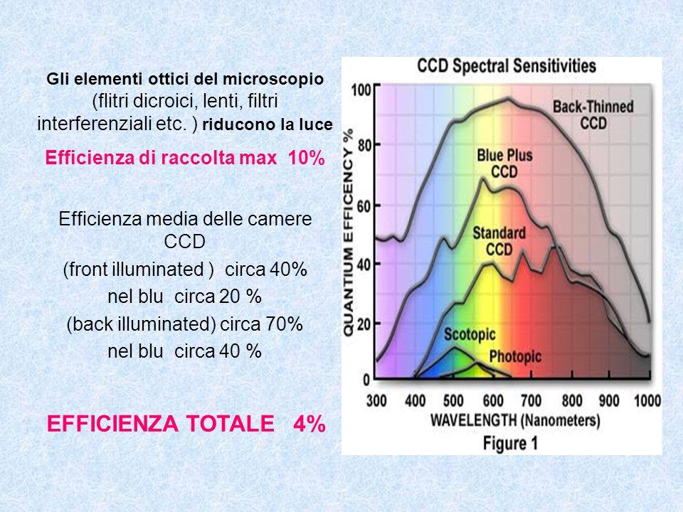 Gli elementi ottici del microscopio (flitri dicroici, lenti, filtri interferenziali etc. ) riducono la luce Efficienza di raccolta max 10% Efficienza