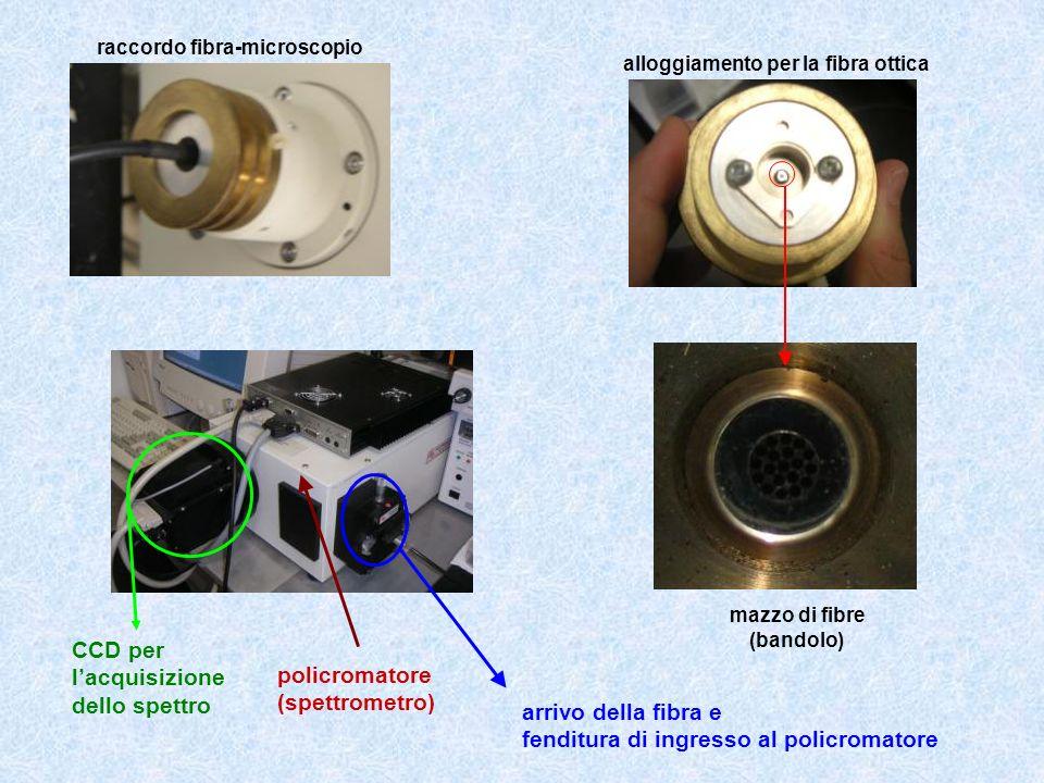 alloggiamento per la fibra ottica mazzo di fibre (bandolo) raccordo fibra-microscopio CCD per lacquisizione dello spettro policromatore (spettrometro)