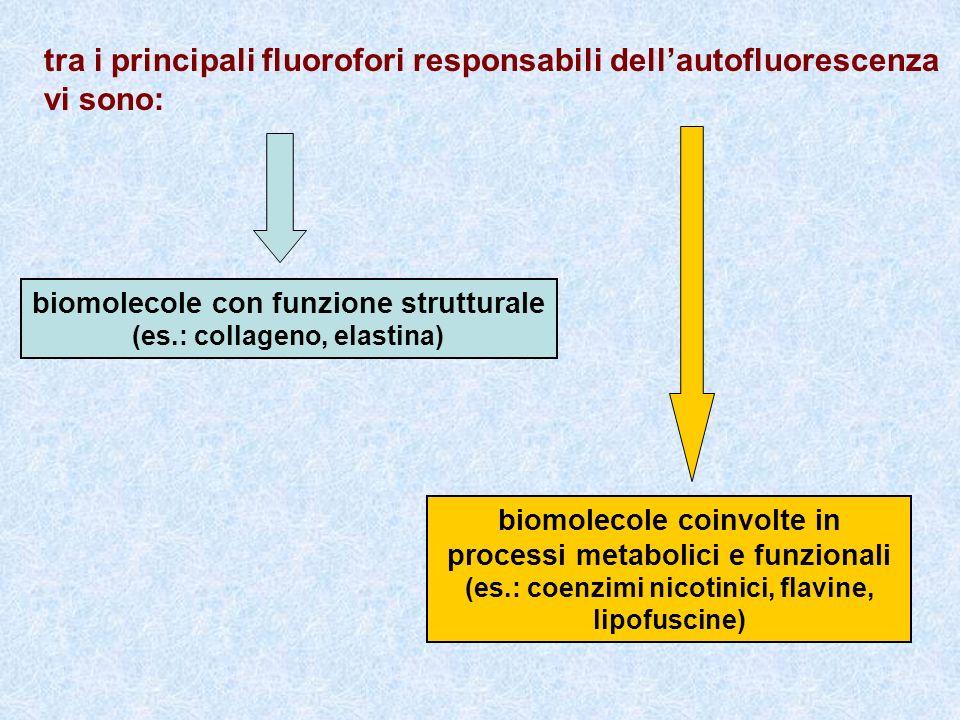 tra i principali fluorofori responsabili dellautofluorescenza vi sono: biomolecole con funzione strutturale (es.: collageno, elastina) biomolecole coi