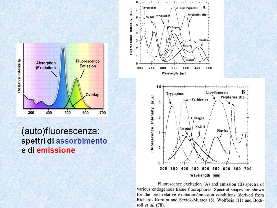 (auto)fluorescenza: spettri di assorbimento e di emissione