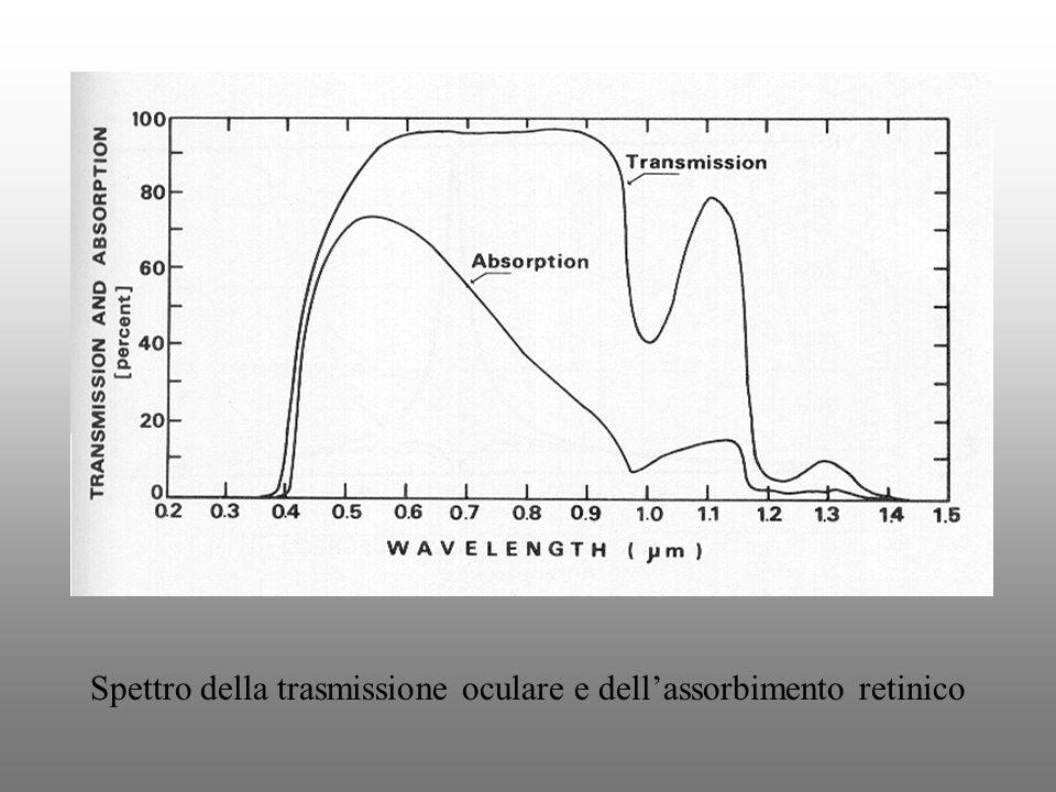 Spettro della trasmissione oculare e dellassorbimento retinico