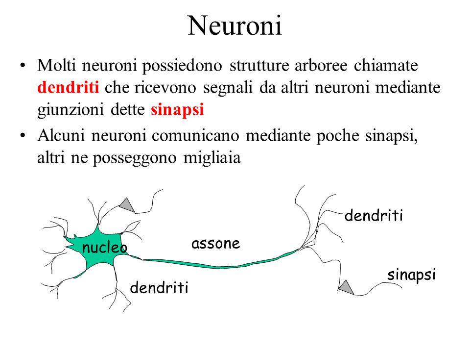 Funzionamento di un Neurone Si stima che il cervello umano contenga oltre 100 miliardi di neuroni e che un neurone può avere oltre 1000 sinapsi in ingresso e in uscita Tempo di commutazione di alcuni millisecondi (assai più lento di una porta logica), ma connettività centinaia di volte superiore Un neurone trasmette informazioni agli altri neuroni tramite il proprio assone Lassone trasmette impulsi elettrici, che dipendono dal suo potenziale Linformazione trasmessa può essere eccitatoria oppure inibitoria Un neurone riceve in ingresso segnali di varia natura, che vengono sommati Se linfluenza eccitatoria è predominante, il neurone si attiva e genera messaggi informativi verso le sinapsi di uscita