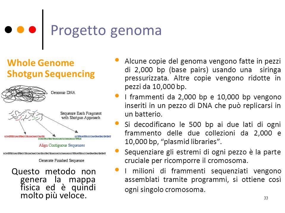 Progetto genoma Alcune copie del genoma vengono fatte in pezzi di 2,000 bp (base pairs) usando una siringa pressurizzata. Altre copie vengono ridotte