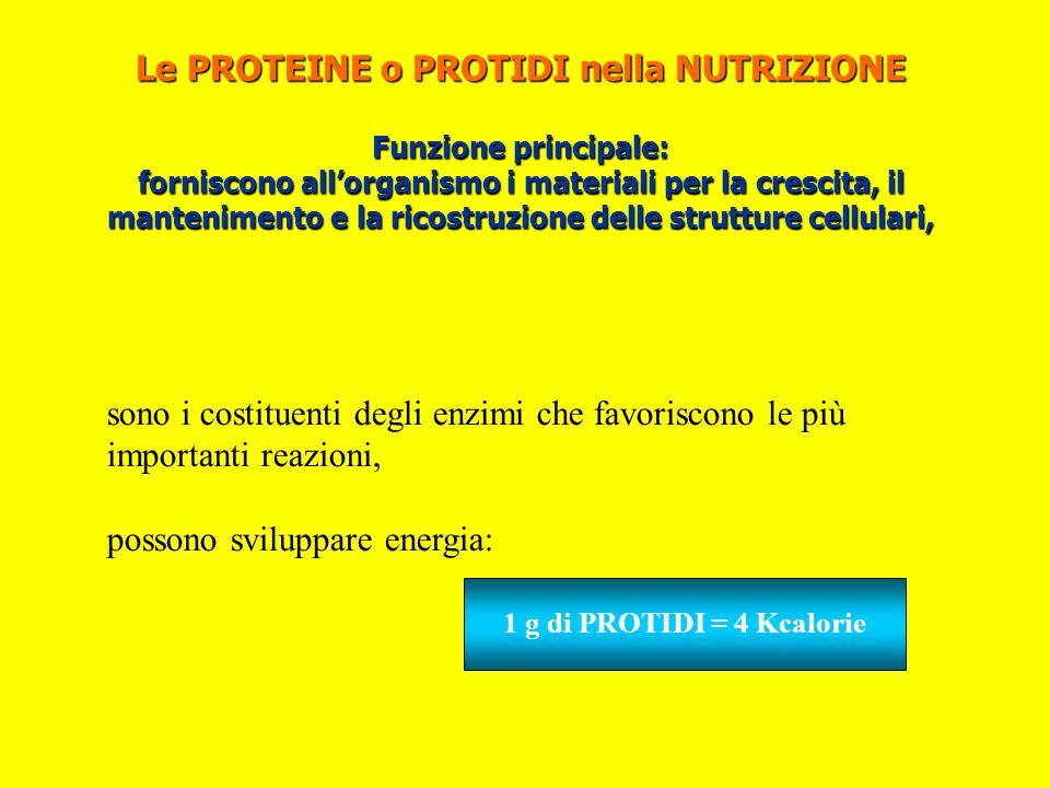 Le PROTEINE o PROTIDI nella NUTRIZIONE Funzione principale: forniscono allorganismo i materiali per la crescita, il mantenimento e la ricostruzione de