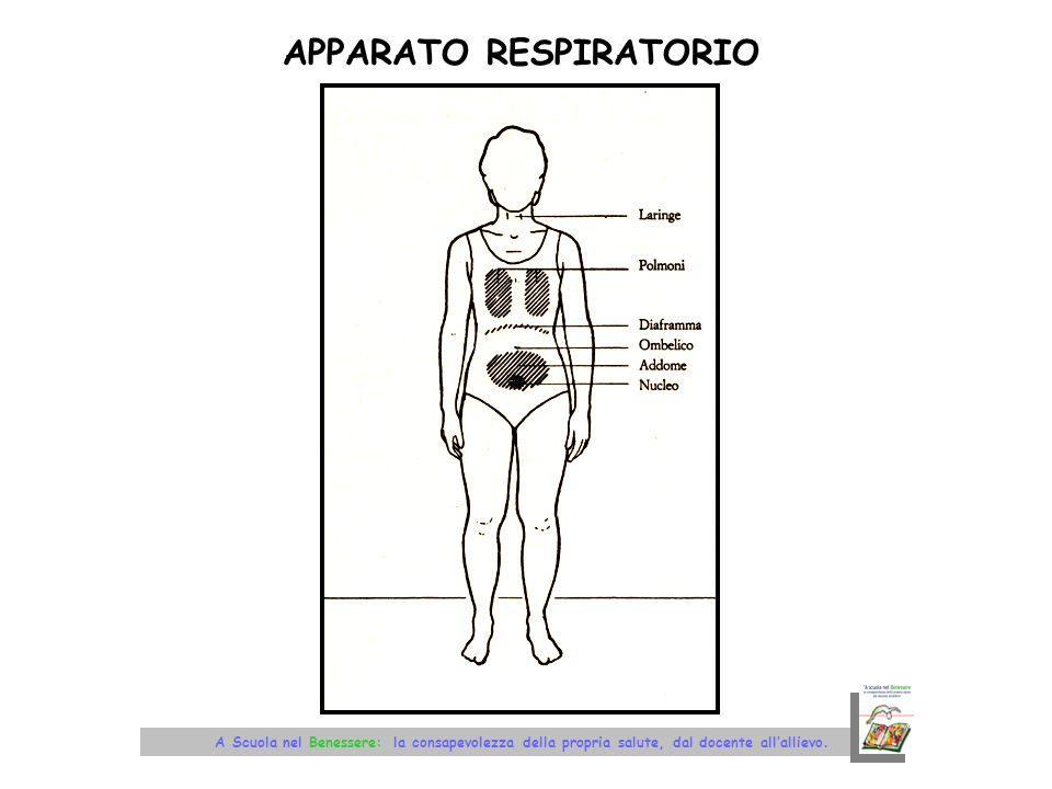 RICAMBIO DARIA NEI POLMONI A – parte superiore respirazione superficiale – persone sedentarie (lobo superiore del polmone) B – zona centrale respirazione che libera metà della capacità dei polmoni – persona sportive C - semitotale respirazione più profonda (utilizzo del diaframma) (i polmoni si svuotano quasi completamente) D – totale respirazione profonda (lobo inferiore) (espulsione della massima quantità di aria stagnante)