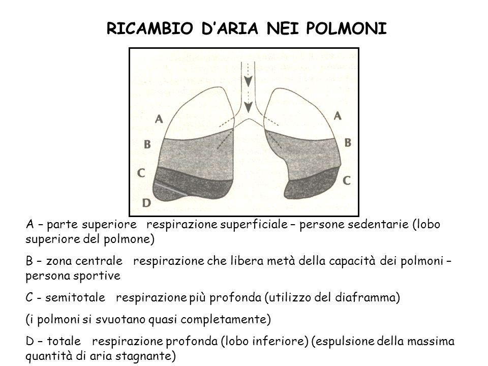 RICAMBIO DARIA NEI POLMONI A – parte superiore respirazione superficiale – persone sedentarie (lobo superiore del polmone) B – zona centrale respirazi