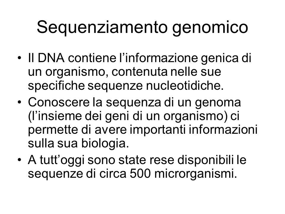 Sequenziamento genomico Il DNA contiene linformazione genica di un organismo, contenuta nelle sue specifiche sequenze nucleotidiche. Conoscere la sequ