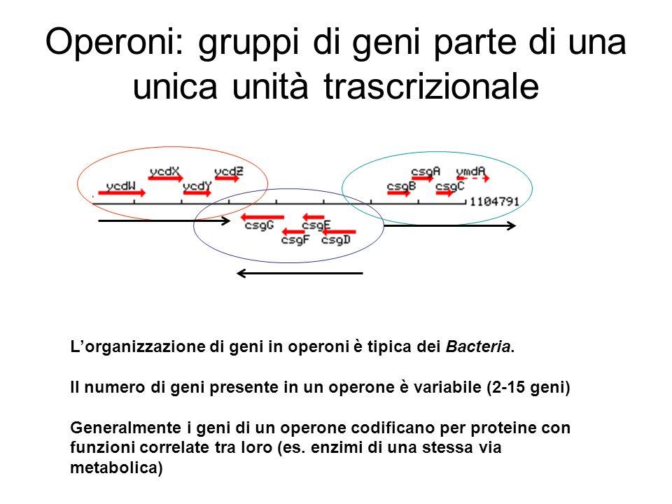 Operoni: gruppi di geni parte di una unica unità trascrizionale Lorganizzazione di geni in operoni è tipica dei Bacteria. Il numero di geni presente i