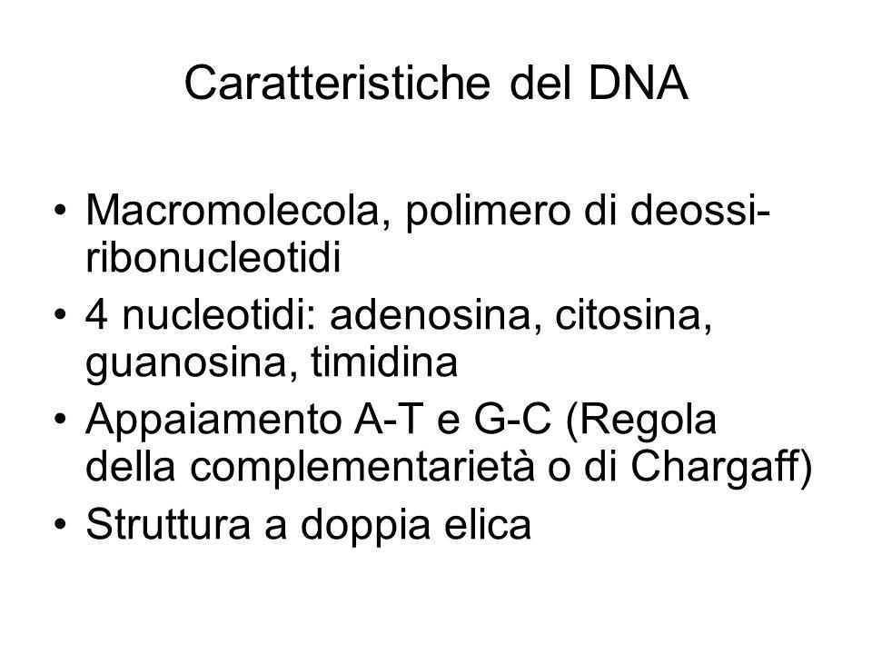 Caratteristiche del DNA Macromolecola, polimero di deossi- ribonucleotidi 4 nucleotidi: adenosina, citosina, guanosina, timidina Appaiamento A-T e G-C