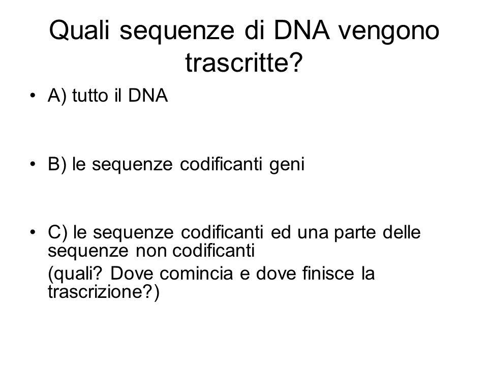 Quali sequenze di DNA vengono trascritte? A) tutto il DNA B) le sequenze codificanti geni C) le sequenze codificanti ed una parte delle sequenze non c