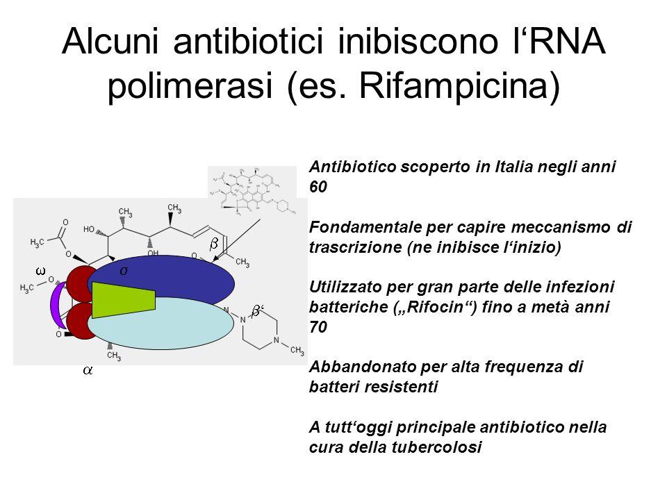 Alcuni antibiotici inibiscono lRNA polimerasi (es. Rifampicina) Antibiotico scoperto in Italia negli anni 60 Fondamentale per capire meccanismo di tra