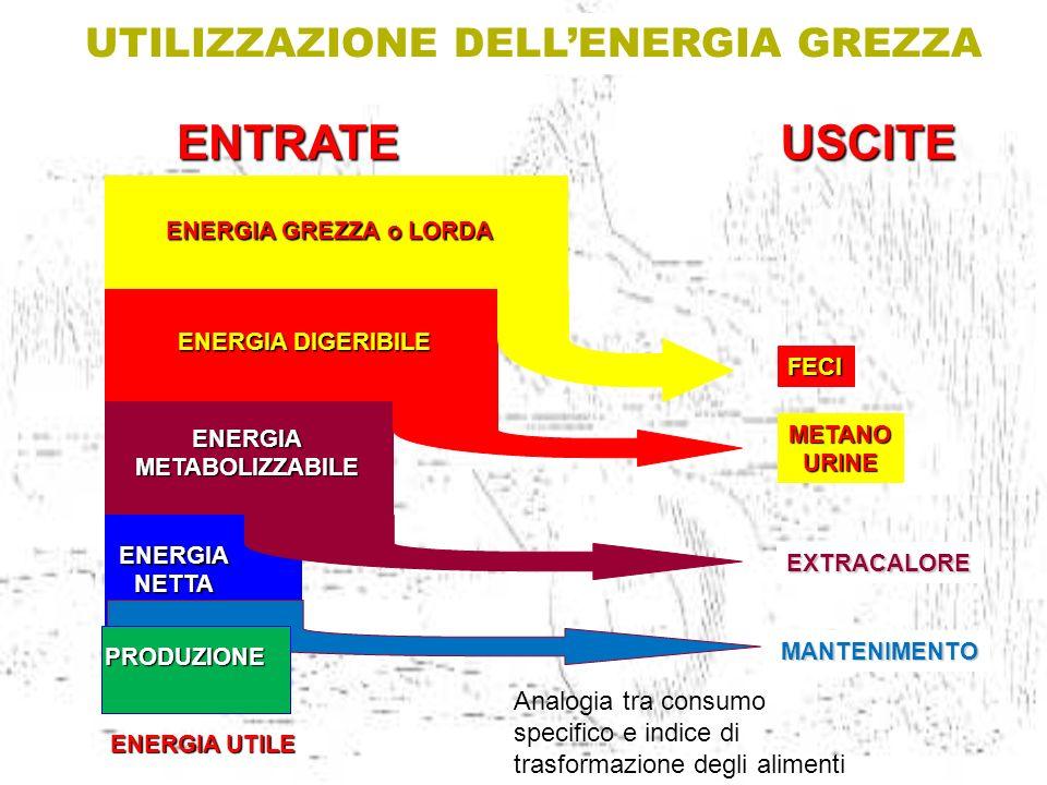 ENERGIA GREZZA o LORDA ENERGIA DIGERIBILE ENERGIAMETABOLIZZABILE ENERGIANETTA FECI METANOURINE EXTRACALORE USCITE UTILIZZAZIONE DELLENERGIA GREZZA ENT