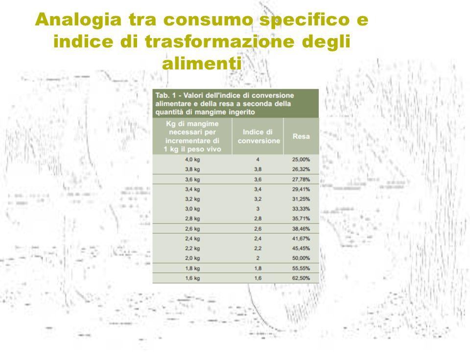 Analogia tra consumo specifico e indice di trasformazione degli alimenti