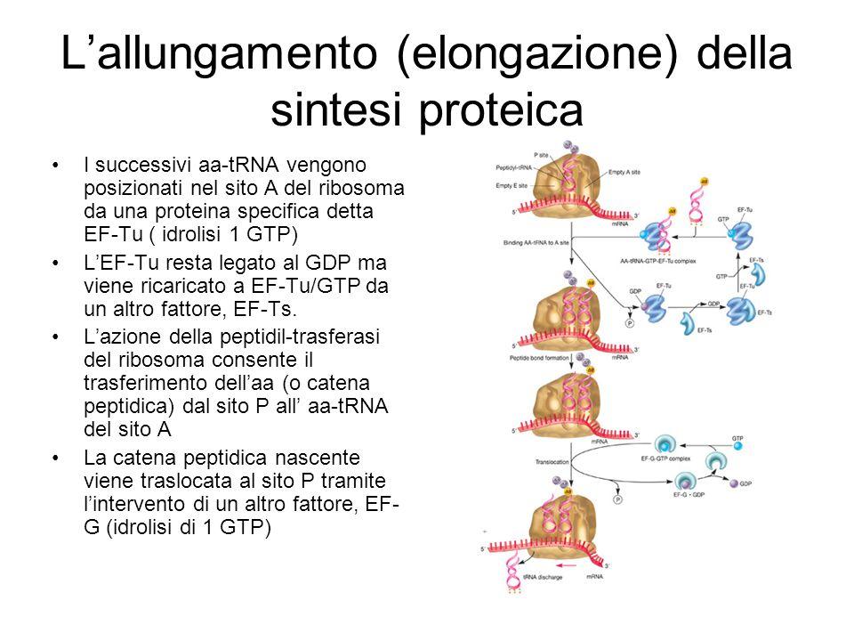 La fase di allungamento della sintesi proteica è il bersaglio di un grande numero di antibiotici Peptidil-trasferasi: Puromicina, cloramfenicolo EF-Tu: kirromicine, pulvomicine EF-G: acido fusidico Ribosoma: tetraciclina, streptomicina, kanamicina