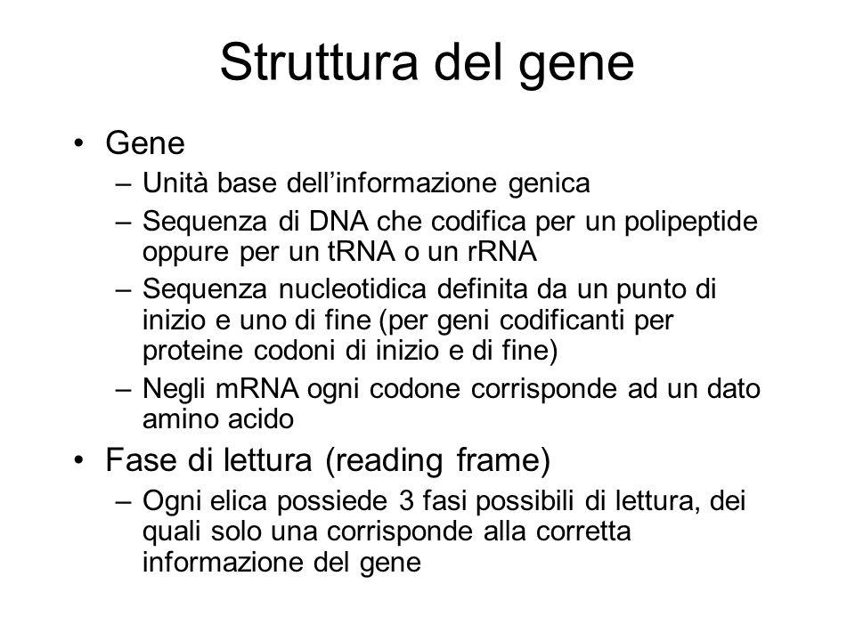 Struttura del gene Gene –Unità base dellinformazione genica –Sequenza di DNA che codifica per un polipeptide oppure per un tRNA o un rRNA –Sequenza nu