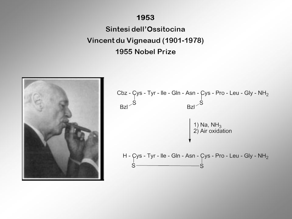 1953 Sintesi dellOssitocina Vincent du Vigneaud (1901-1978) 1955 Nobel Prize