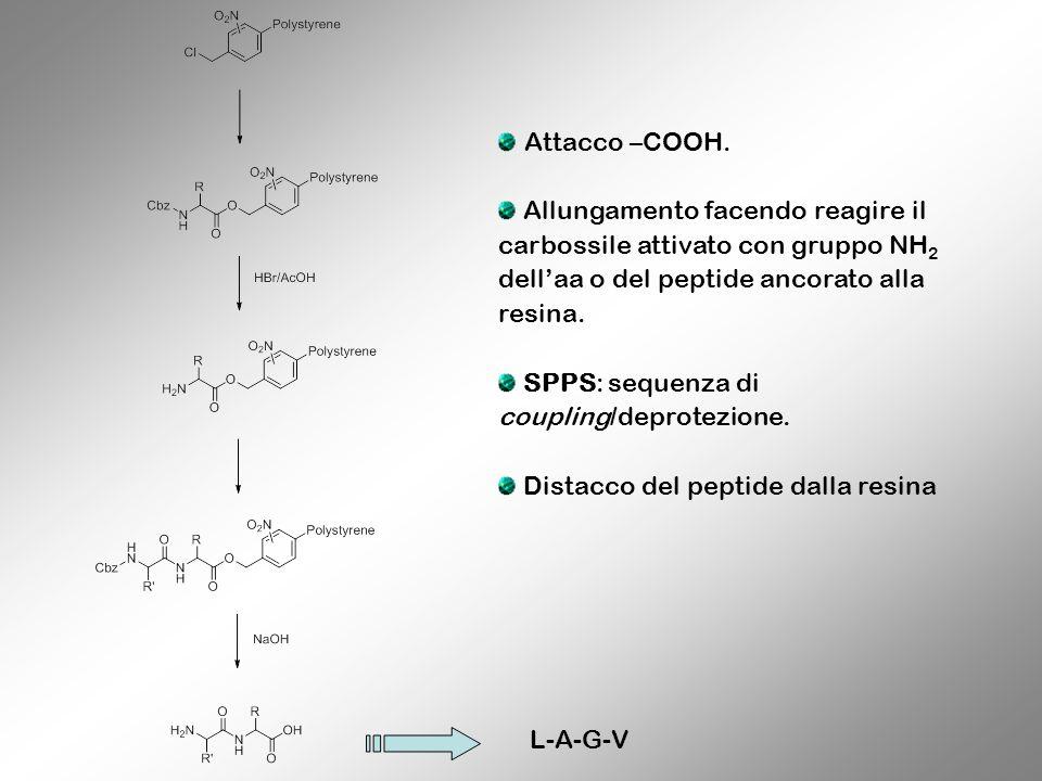 L-A-G-V Attacco –COOH. Allungamento facendo reagire il carbossile attivato con gruppo NH 2 dellaa o del peptide ancorato alla resina. SPPS: sequenza d