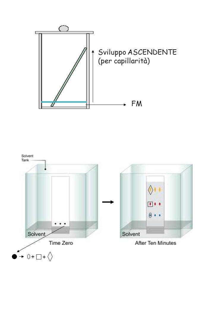 MOBILITA CROMATOGRAFICA: corsa della sostanza sulla lastra Fattore di ritenzione (o di ritardo) Linea di deposizione soluzione Fronte del solvente Rf = b / a dove: b = distanza percorsa da un componente a = distanza percorsa dal solvente