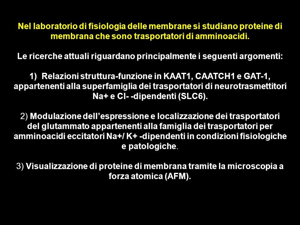 Nel laboratorio di fisiologia delle membrane si studiano proteine di membrana che sono trasportatori di amminoacidi. Le ricerche attuali riguardano pr