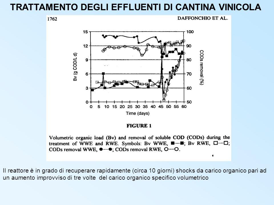 TRATTAMENTO DEGLI EFFLUENTI DI CANTINA VINICOLA Il reattore è in grado di recuperare rapidamente (circa 10 giorni) shocks da carico organico pari ad un aumento improvviso di tre volte del carico organico specifico volumetrico