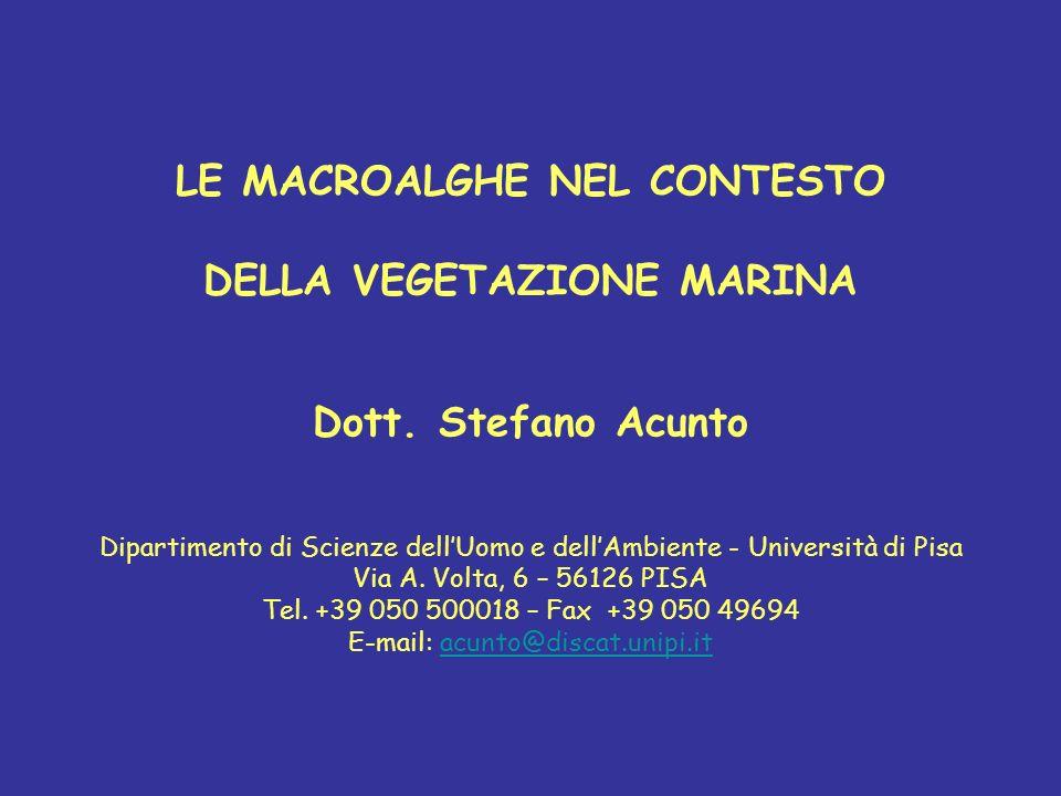 LE MACROALGHE NEL CONTESTO DELLA VEGETAZIONE MARINA Dott. Stefano Acunto Dipartimento di Scienze dellUomo e dellAmbiente - Università di Pisa Via A. V