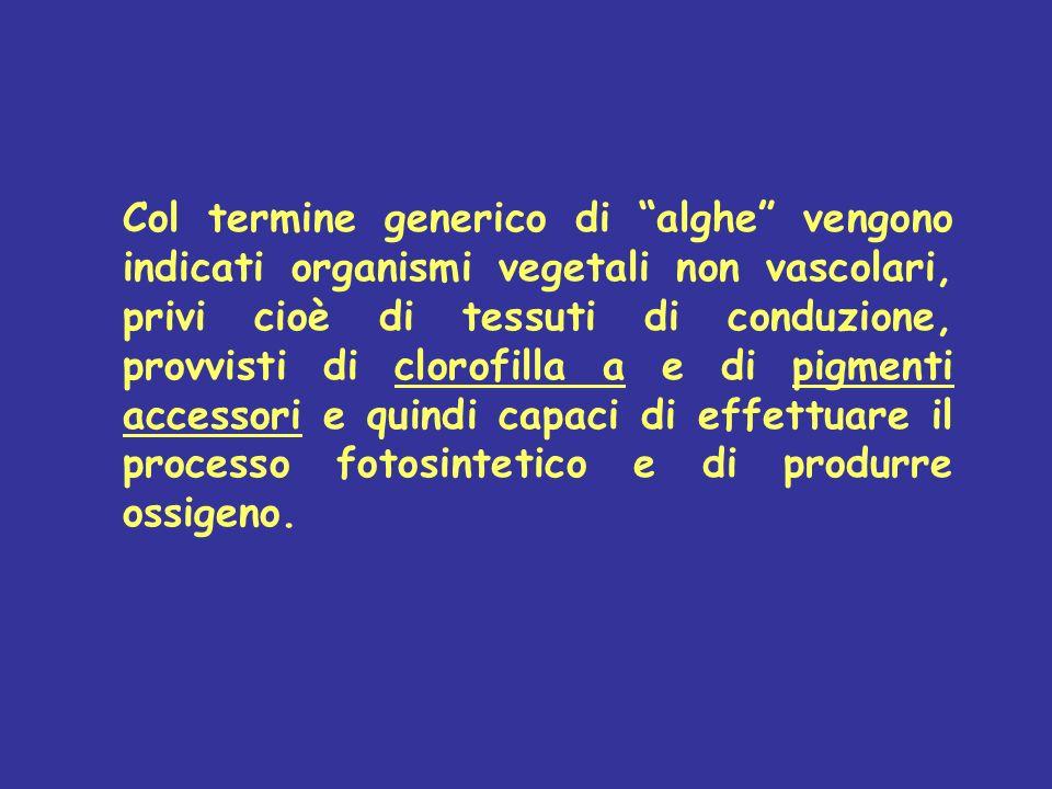 Col termine generico di alghe vengono indicati organismi vegetali non vascolari, privi cioè di tessuti di conduzione, provvisti di clorofilla a e di p