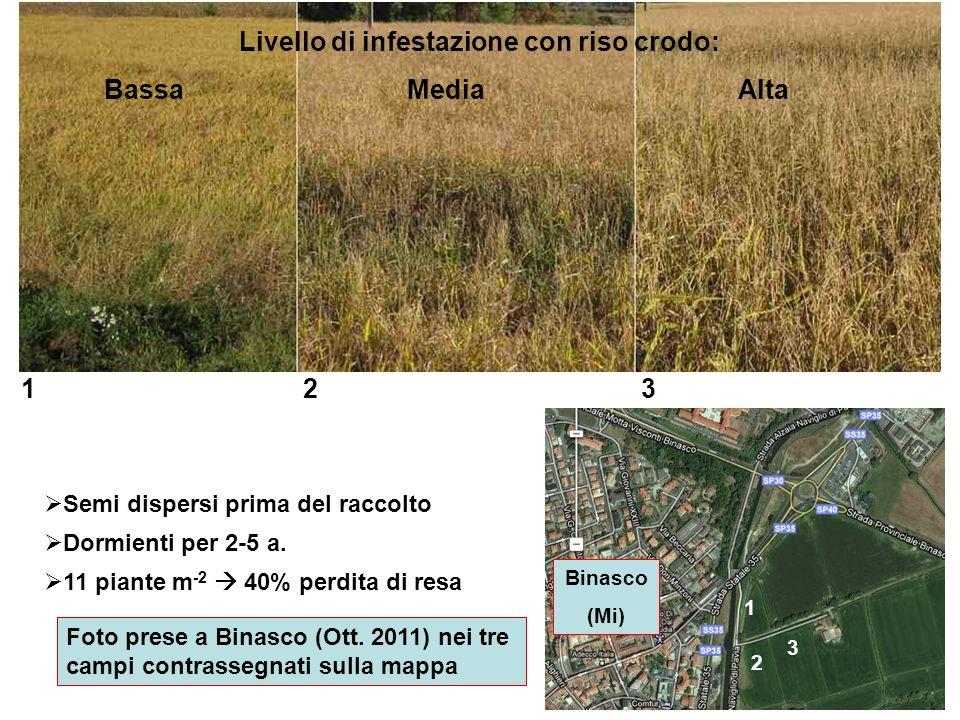 Semi dispersi prima del raccolto Dormienti per 2-5 a. 11 piante m -2 40% perdita di resa 1 23 2 3 1 Binasco (Mi) Foto prese a Binasco (Ott. 2011) nei