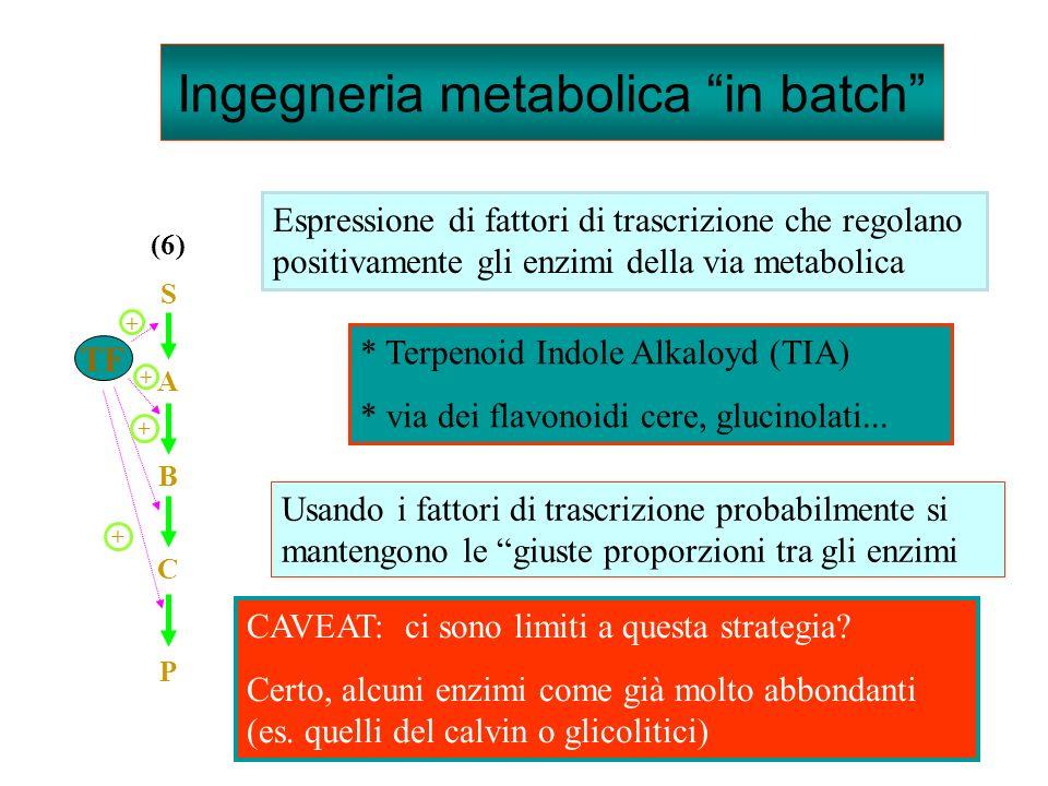 Espressione di fattori di trascrizione che regolano positivamente gli enzimi della via metabolica * Terpenoid Indole Alkaloyd (TIA) * via dei flavonoidi cere, glucinolati...