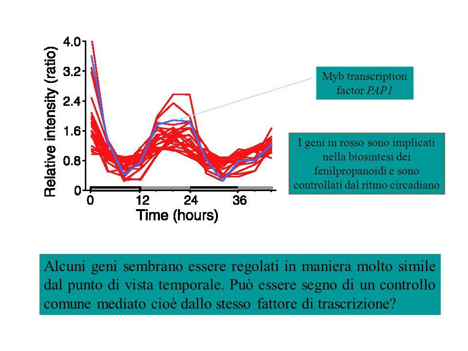 Alcuni geni sembrano essere regolati in maniera molto simile dal punto di vista temporale.